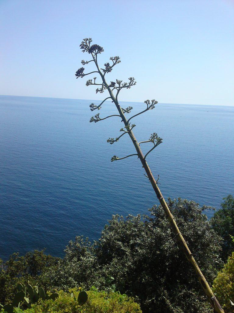 Cinque Terre, Ligurië, Italië: www.alassio.nl Cinque Terre vakantie accommodaties